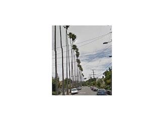 Landmark 22 - Arbor Villa Palm Trees