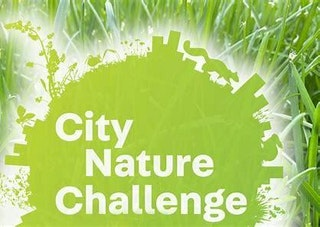 City Nature Challenge logo in green with grass image