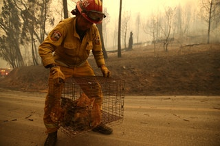 CalFire fighter rescuing cats.